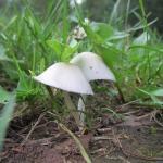 2012-09-01_19-49-02_leitertour